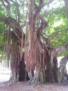 tree-e1408385669345